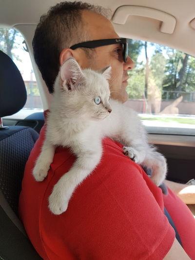 Pets Car