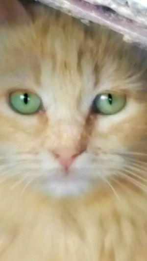 Portrait Close-up Looking At Camera Cat Eye Cats Eyes Green Eyes Pet Family Feline Animals Kitten Kitty Orange Tabby Cat Animal Head  Furfamily Furbaby Blurry On Purpose Softness Blurred Photography Bright Green Staring At Me Sad