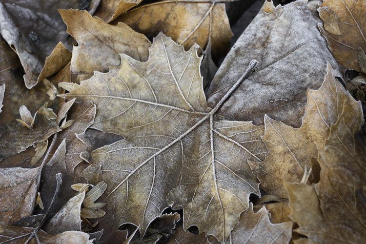 Frost on autumn
