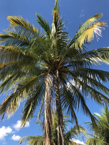 Blue and green Sky Low Angle View Plant Tree Growth Palm Tree Tropical Climate Beauty In Nature No People Blue Green Color Sunlight