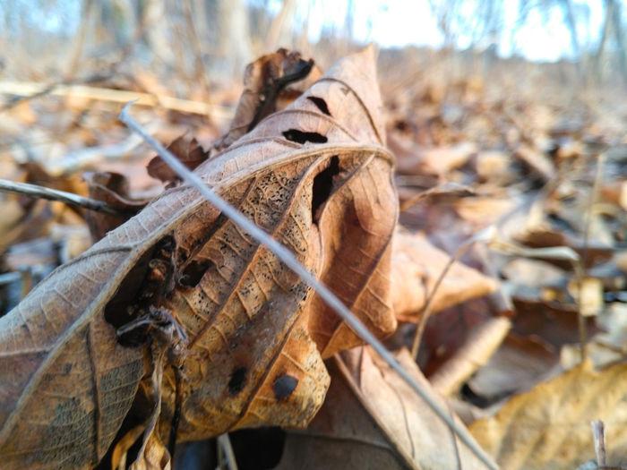 Leaves Leaf