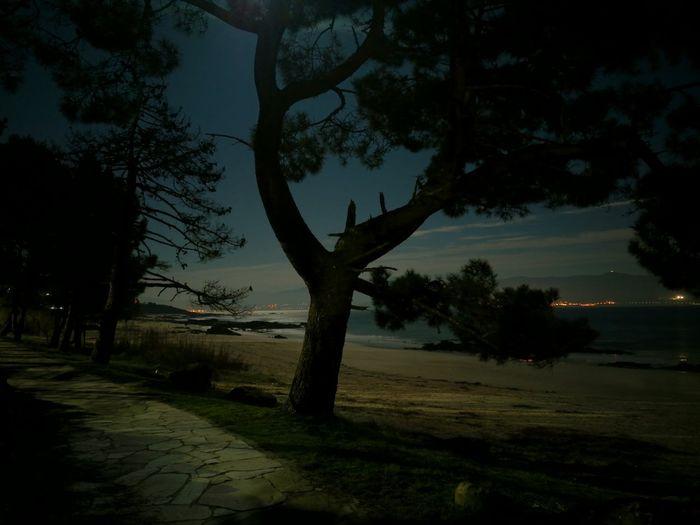 Tree Night Star