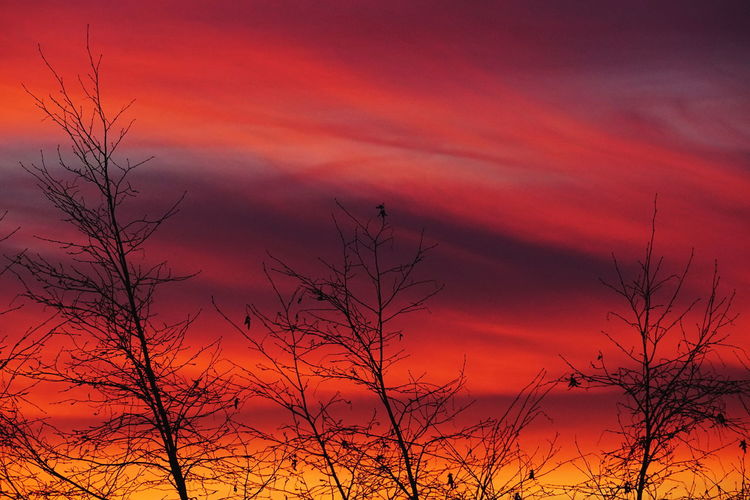 Sunset Sky Orange Color Cloud - Sky Beauty In Nature Bare Tree Silhouette Dramatic Sky Dramatic Sky Cloudscape