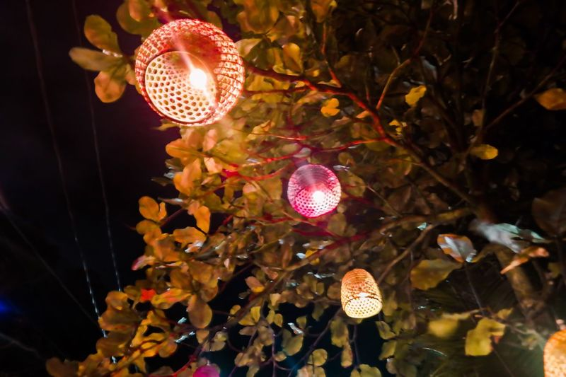Low angle view of illuminated lanterns hanging on tree