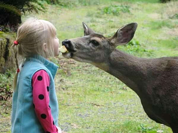 My daughter One Animal Blond Hair Child Standing Grass Childhood Day Outdoors Real People Amazing Places To See Deer Animals Eating Animals In The Wild Animals Lovers Animals Lover Animals Love She Talks To Deer Animal Themes Beauty In Nature Nature Leisure Activity Animal Child
