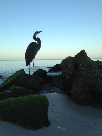 Sea Water Horizon Over Water One Animal Animal Themes Bird Standing Wildlife Animals In The Wild Animal Representation Great Blue Heron Heron Nature Full Length Tranquility Beauty In Nature Scenics Blue Creativity Outdoors Ocean