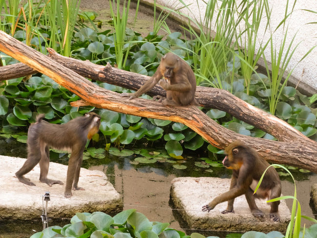 Monkeys Animal Animal Family Animal Themes Animal Wildlife Animals In The Wild Day Group Of Animals Growth Leaf Mammal Monkey Nature No People Outdoors Plant Plant Part Primate Tree Two Animals Vertebrate