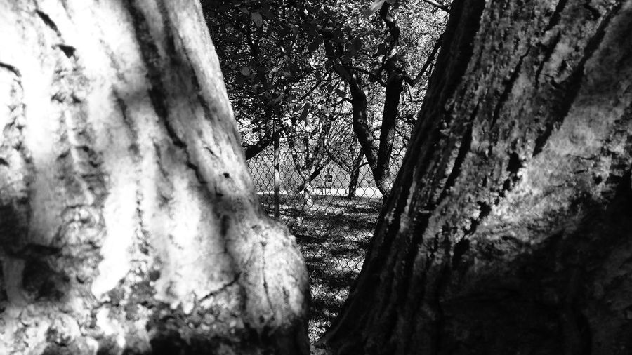 Chair Between Legs Tree EyeEm Lost In The Landscape Connected By Travel Black&white Check This Out Week On Eyeem Black And White Collection  Photography Themes Eyeemphotography Blackandwhitephotography EyeEm Gallery From My Point Of View Searching For Inspiration Beauty In Nature The Week On EyeEm Fine Art Photography Art Is Everywhere EyeEm Best Shots Outdoors Backgrounds Abstract Nature