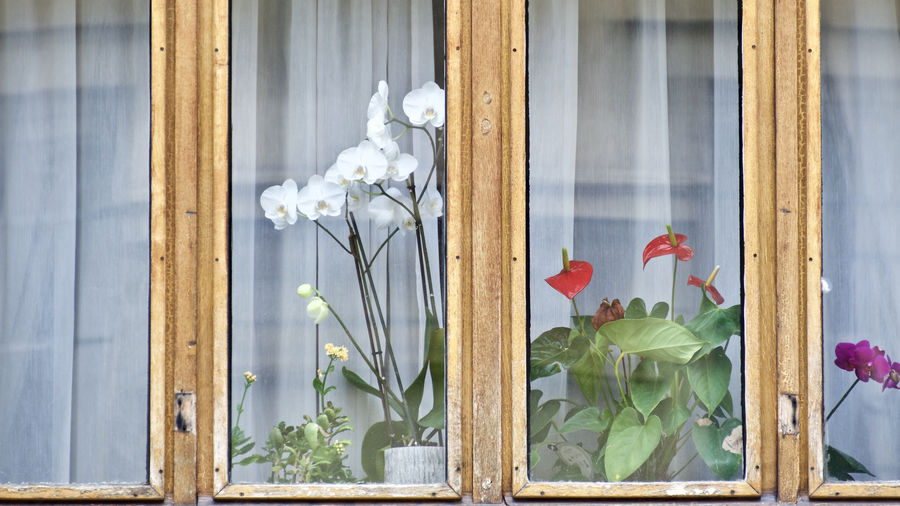 Flowers on sill seen from window glass