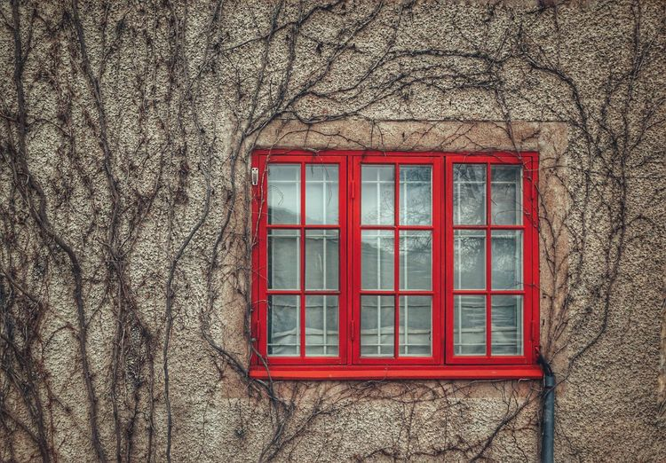 2019 Niklas Storm April Window Red Architecture Building Exterior Built Structure Close-up Closed Growing Wall Window Frame My Best Photo
