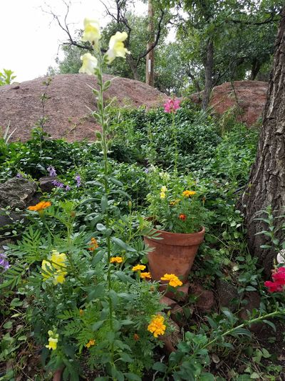 Wildflowers In Bloom Growth Outdoors Beauty In Nature Fragility Garden