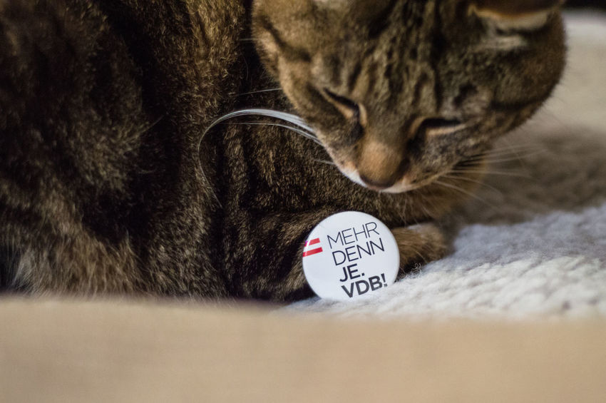 Cats for Van der Bellen, Austrian presidential election #vdb #mehrdennje Animal Head  Animal Themes Cat Cat Lovers Catoftheday Cats Cats Of EyeEm Cats4vdB Cat♡ Feline Mammal No People Pet Pets