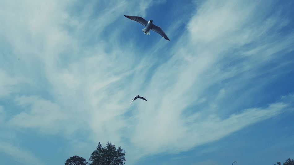 Flying Bird Sky Mid-air Animals In The Wild Low Angle View Animal Wildlife Cloud - Sky Day Animal Themes Spread Wings Outdoors No People Airshow Vulture Low Angel View Beauty In Nature Shades Of Blue Blue Blue Sky Blue Wave Bluesky EyeEm Animal Lover EyeEm Best Shots EyeEm Birds