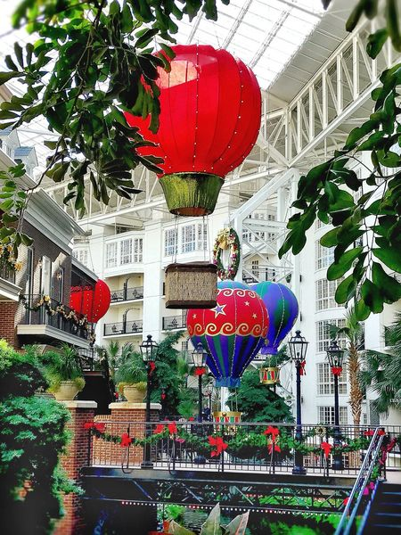 Red Celebration Tree Growth Architecture No People Gaylord Opryland Resort Gaylordhotel Ceiling Lights Eye4photography  Nashville Nashville Tennessee!  Christmas Decoration Beauty In Nature The South Built Structure Treescape Hotairballoon Trees Collection Multi Colored