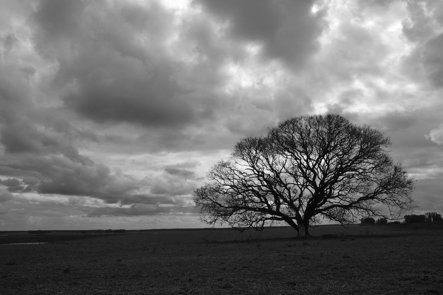 Bare Tree Branch Cloud - Sky Field Landscape Outdoors Sky Tranquility Black And White Friday