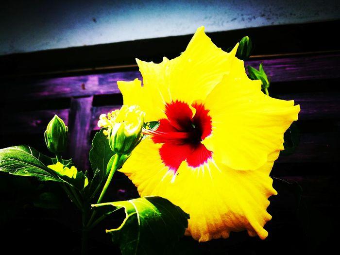 Flower Flower Head Bunga Raya