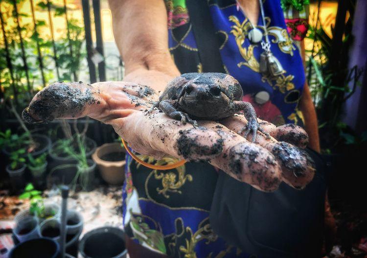 Close-up of woman holding bullfrog