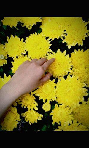 Flowers Hand Feeling Good Likeasun