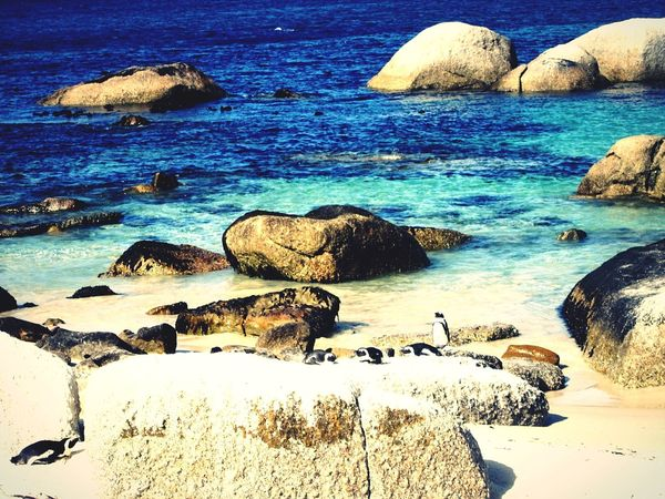 Like a painting! Sea Rock - Object Beach Tranquil Scene Water Tranquility Beauty In Nature Nature No People Scenics Sand Outdoors Day Animal Themes Sky EyeEmNewHere South Africa Penguins!