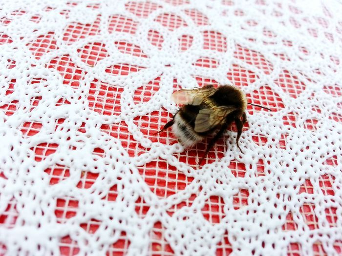 High Angle View Of Bumblebee On Textile