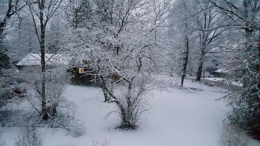 Beauty In Nature Winter Snow