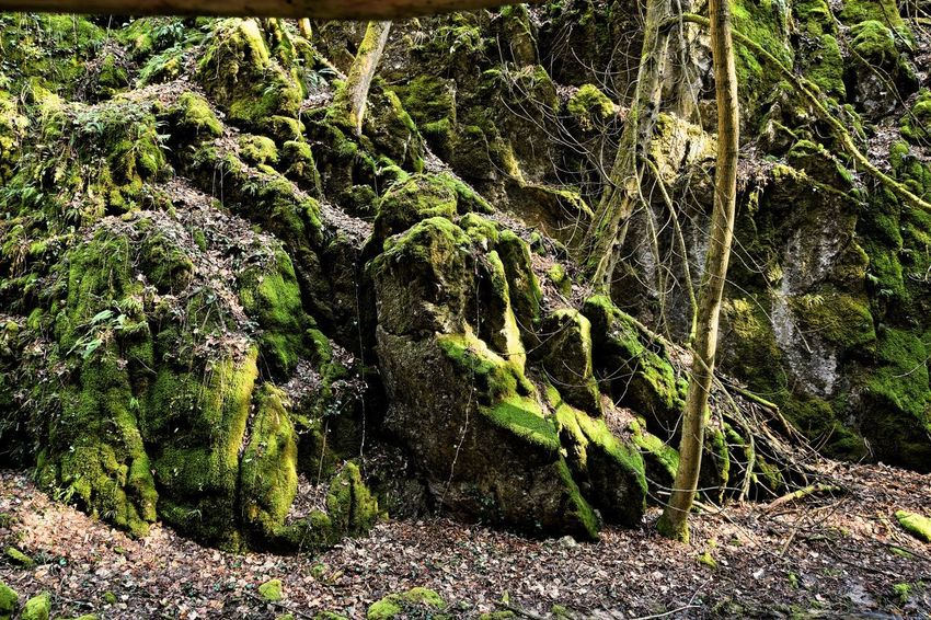 Beauty In Nature Forest Green Color Growth Moss Outdoors Rock - Object Tree