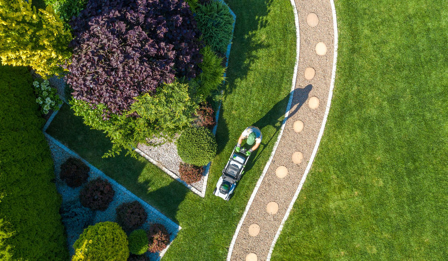 High angle view of green plants in garden