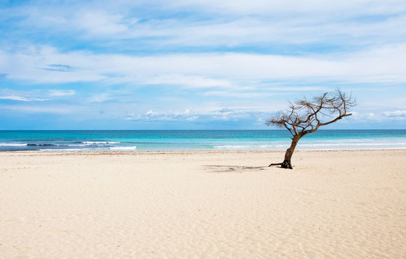Tree on beach Sea Beach Horizon Over Water Tree Sky Sand Water Nature Scenics Tranquility Beauty In Nature Tranquil Scene Outdoors Day No People
