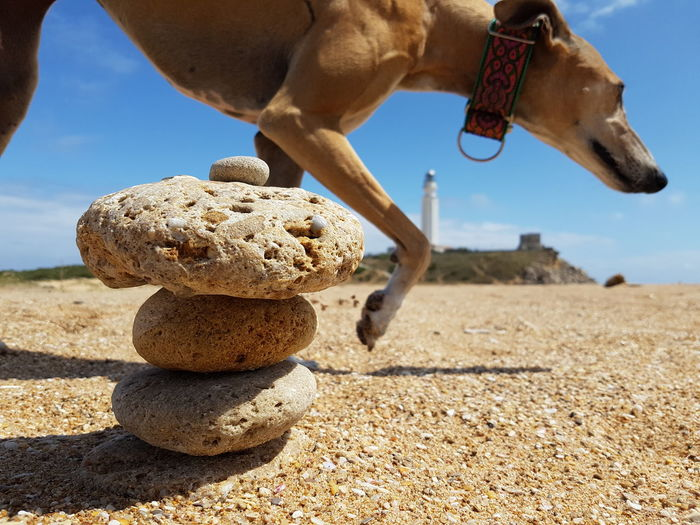 Cropped dog against stack of pebbles