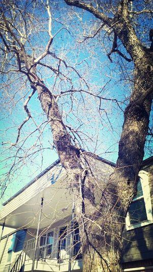 them naked trees lol Trees Tree Lover