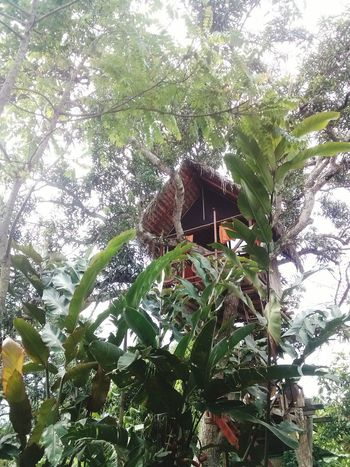 Treehouse Manabí Calceta Rutadelcacao Hacienda Sarita