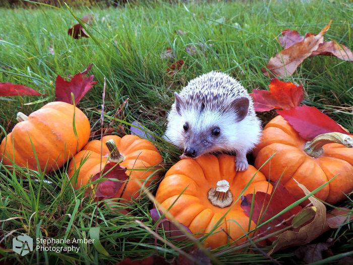Pumpkins on field during autumn