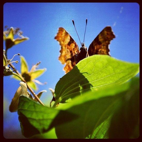 Comma Butterfly Comma Butterfly Instagram