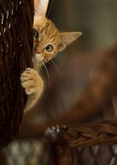 Timon playing