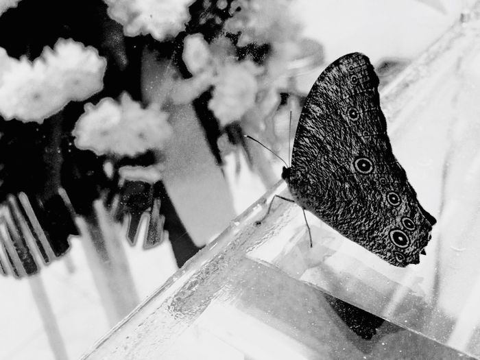 BUTTERFLY. EyeEm Best Shots Eyeem Philippines EyeEmCDO Faces Of EyeEm Blackandwhitephotography MJBRPhotography