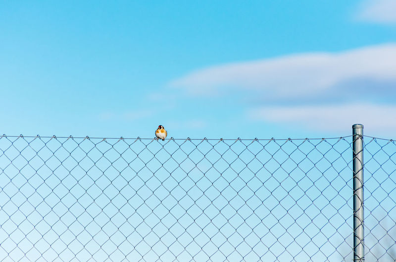Rear view of chainlink fence against blue sky