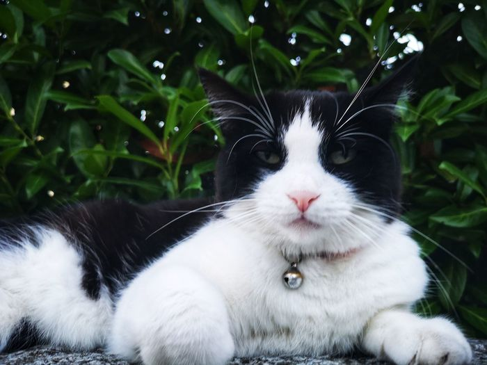 First Eyeem Photo Cat Nature Pets Portrait Feline Sitting Ear Domestic Cat Whisker Theatrical Performance Cute Animal Hair