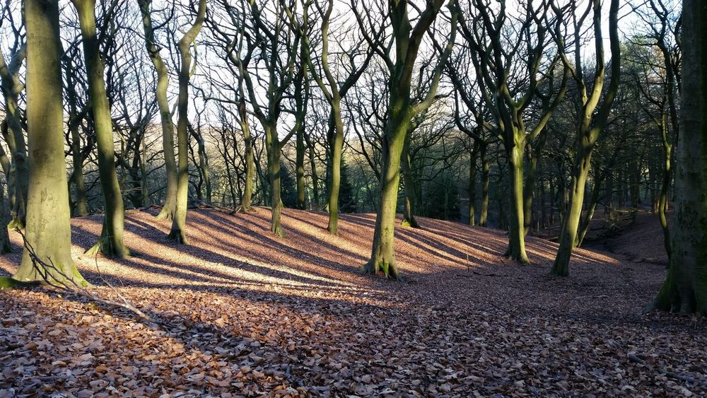 Tandlehill Park Tree Branches Sun Beams Sun & Trees Tree Silhouette Tree Shade Tree Shadows Tree Shadow Tree Roots  Tree Trees Forest WoodLand