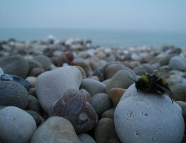 No People Sea Beach Nature Outdoors Beauty In Nature Sky Pebble Insect Photography