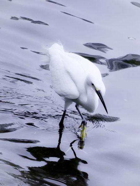 Moving up Egret Bird Water Sea Full Length Animal Themes Close-up
