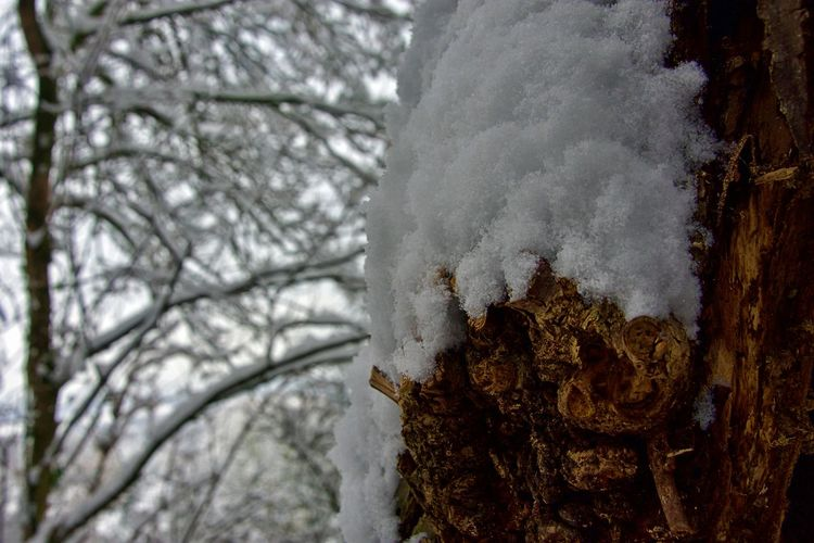 Tree Winter Snow Cold Temperature Plant Nature Tree Trunk No People White Color Trunk Day Frozen Focus On Foreground Close-up Beauty In Nature Covering Branch Outdoors Growth EyeEmNewHere EyeEm Best Shots Enjoying Life EyeEm Nature Lover EyeEm Selects EyeEm Gallery