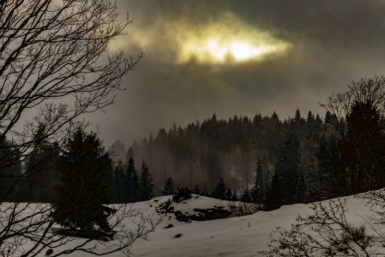 Tree Plant Sky Winter Snow Cold Temperature Cloud - Sky Beauty In Nature Scenics - Nature Tranquility Nature Tranquil Scene No People Land Non-urban Scene Covering Forest Landscape Idyllic Snowcapped Mountain Pine Tree Coniferous Tree