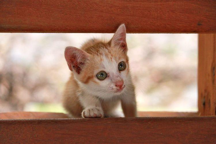 Close-Up Of Kitten Looking Away Through Wood