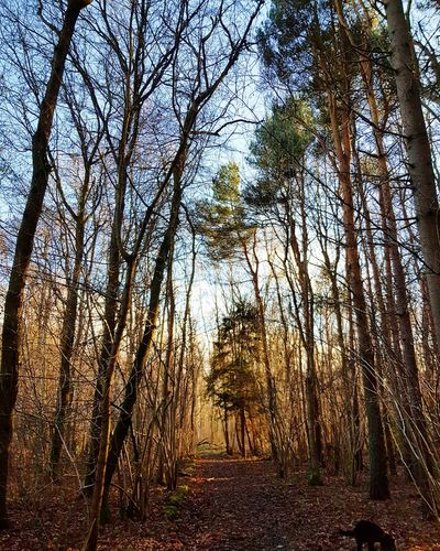 winter walk Low Angle View Growth Landscape Scenics