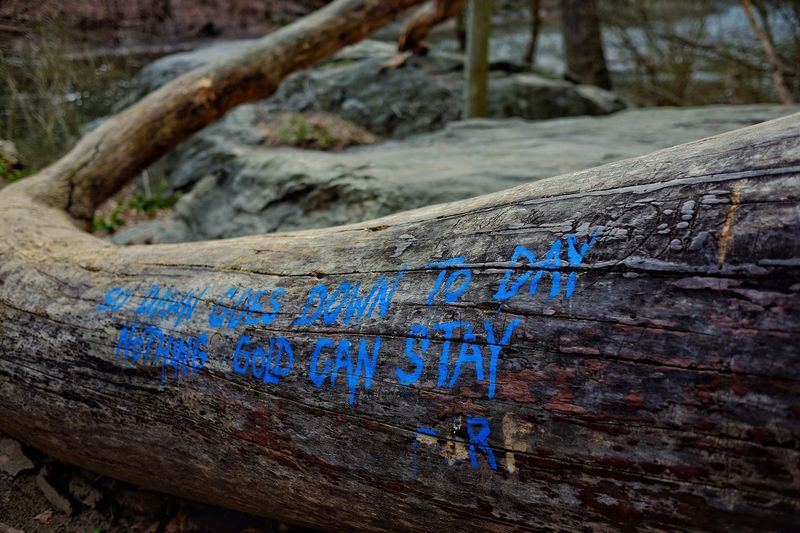 Wood - Material Text Tree Trunk No People Tranquility Day Outdoors Tree Nature Close-up Flag Phillylove ❤️ Visit Philly Fujifilm Mobilephotography