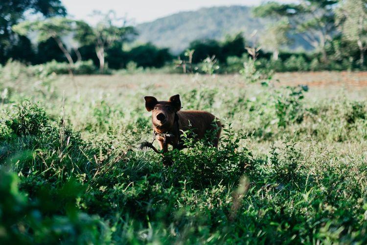 Piggy Bank Pig Piglet Land Looking At Camera Mammal Animal Themes Farm Animal Organic Farm