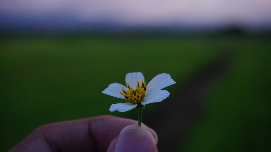 Close-up of hand holding flower against sky