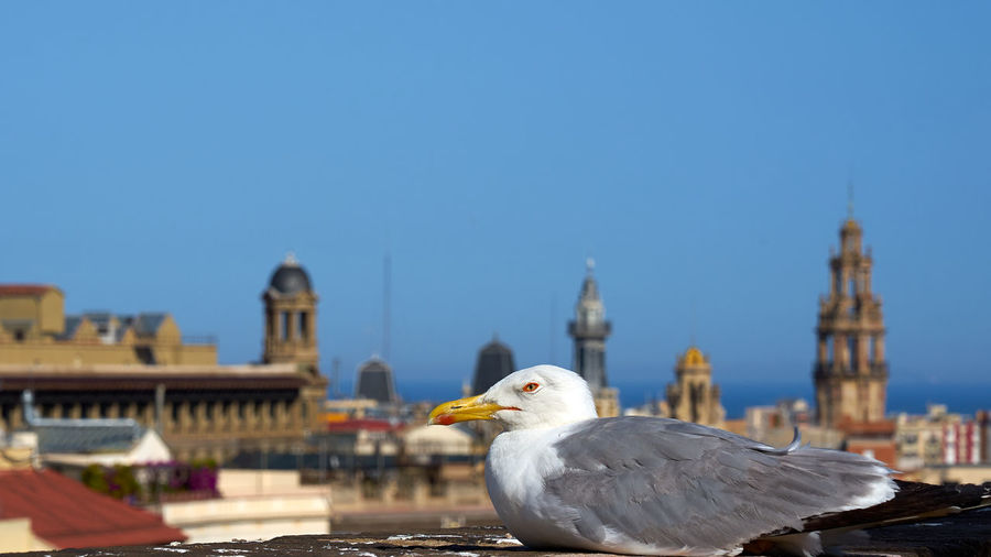 View of seagull against buildings in city