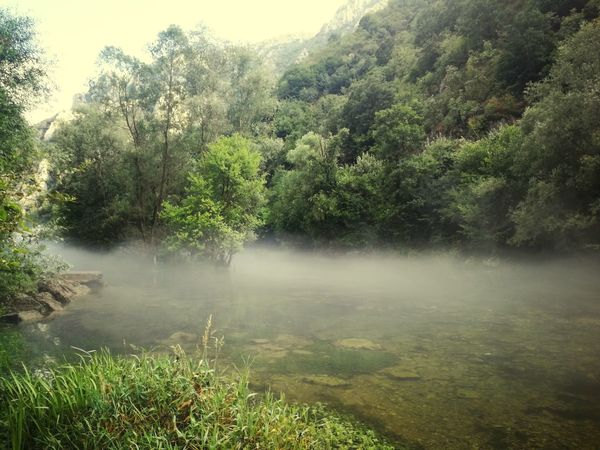 15 Ways Of Seeing: Silence 15 Ways Of Seeing: Green Matka Canyon Macedonia EyeEmNewHere Beuty In Nature Riverside Tree Water Fog Landscape Woods