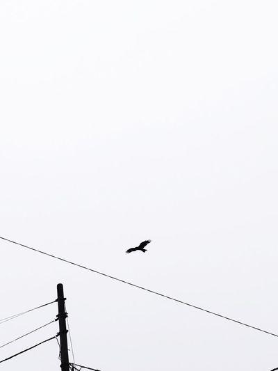 Bird Flying Animal Themes Sky